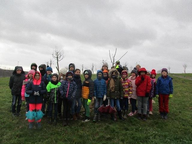 Apfelbaum-pflanzen-2
